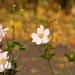 Kis virágok az őszben