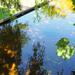 Tulln, die Garten Tulln, SzG3