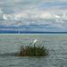 Kócsag sziget