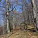 Aconito Fagetum - montán bükkös Három-hárs
