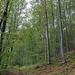 Album - Élőhelyek - erdők