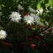 kaktusz árnyékban