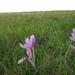 Üveges út avatása 2012.10.05. 161