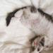 Album - új cica