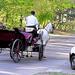 közlekedési eszközök találkozója