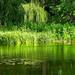 zöld tükör