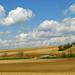 tavaszi szántóföld