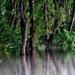 fák a vízben