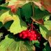 a közelgő ősz jelei