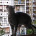 Rori, a nagy hálómászó:)