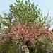 kétszínű fa