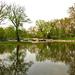 virágszirmos tiszta víz a tóban