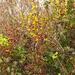 érintetlen természetes természet - az ősz színei