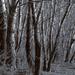 sűrű, sötét erdő!:):)