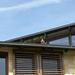 kacsa a tetőn