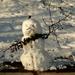 hóemberke olvadásnak indulva