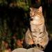 A temető macskája 1.