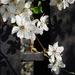 Tavaszi virágom 6.