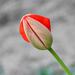 Tavaszi virágom 4.