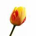 Tavaszi virágom 3.
