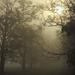 ködös reggel