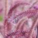 Album - Lauritzen Gardens