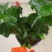 növények 026