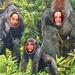 Állatkerti ragadozók