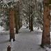 Album - Tél a kastély parkjában