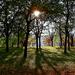 Album - Virágok, fák, természet