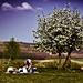 Húsvéti piknik