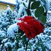 Első hó 2012 2180