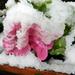 Áprilisi tél 5463