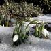 Album - Tavaszi virágok