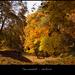ősz-színek