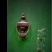zölden kopogó
