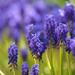 kék kert -4