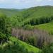 Gyepes-völgy