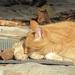 Nagykovácsi macskák/zord idők blog