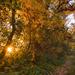 Októberi színorgia