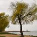 Tavaszi szél a parton
