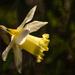 Újra tavaszBB