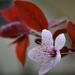 Tavaszi virágzásBBB