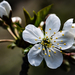 Virágba borulnak lassan
