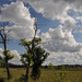 Májusi felhők a réten