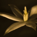 Virággyertya
