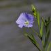 Csak egy szál virág