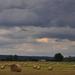 Eső előtt a kaszálón