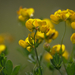 Kis virágok