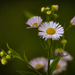 Kis Virág BBBB